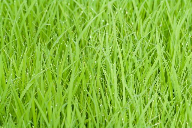 Césped que huele a hierba fresca