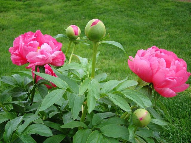 Combina césped artificial con plantas naturales
